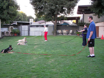 groupclasses Basic Obedience