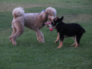 yappy2-300x225 Dog Talk: What Your Dogs Are Saying to Each Other