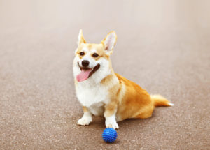 Dog-Toy-300x215 Best Dog Toys!