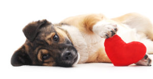 v-day-dog-300x156 7 Reasons to Love Dogs (Even More)