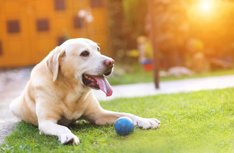 Dog-outside Outdoor Dangers for Your Dog