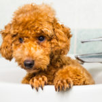 doggy-bath-time-150x150 Five Reasons to be Thankful For Your Pet!