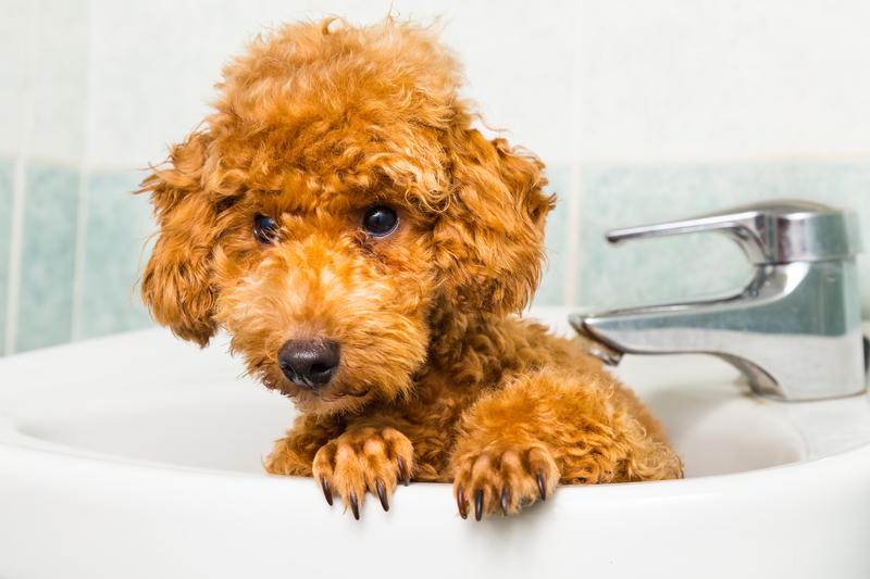 doggy-bath-time Tips On Grooming!