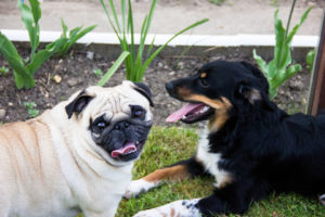 Dog-Talk-300x200 Dog Talk: What Your Dogs Are Saying to Each Other