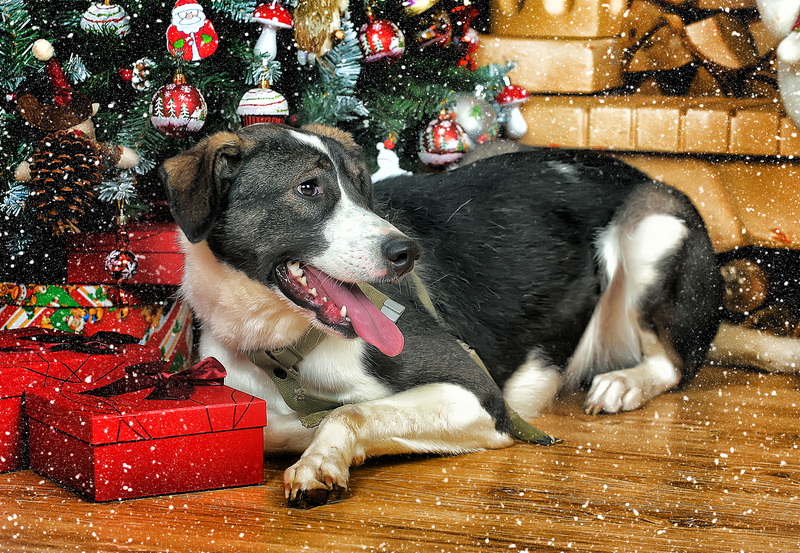 Holiday-Dog Tips For A Safe and Jolly Holiday Season