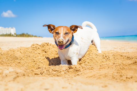 IADW Summer is Sizzling – Keep Pet Safety in Mind!