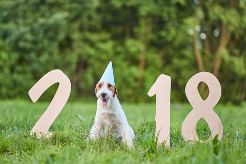 dreamstime_xs_101922458 Health & Happiness in the New Year
